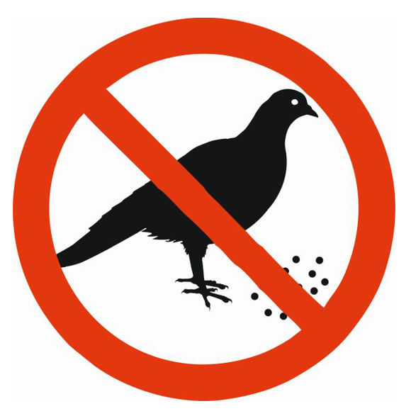 Zákaz kŕmenie kŕmenie holubov vtákov žiara