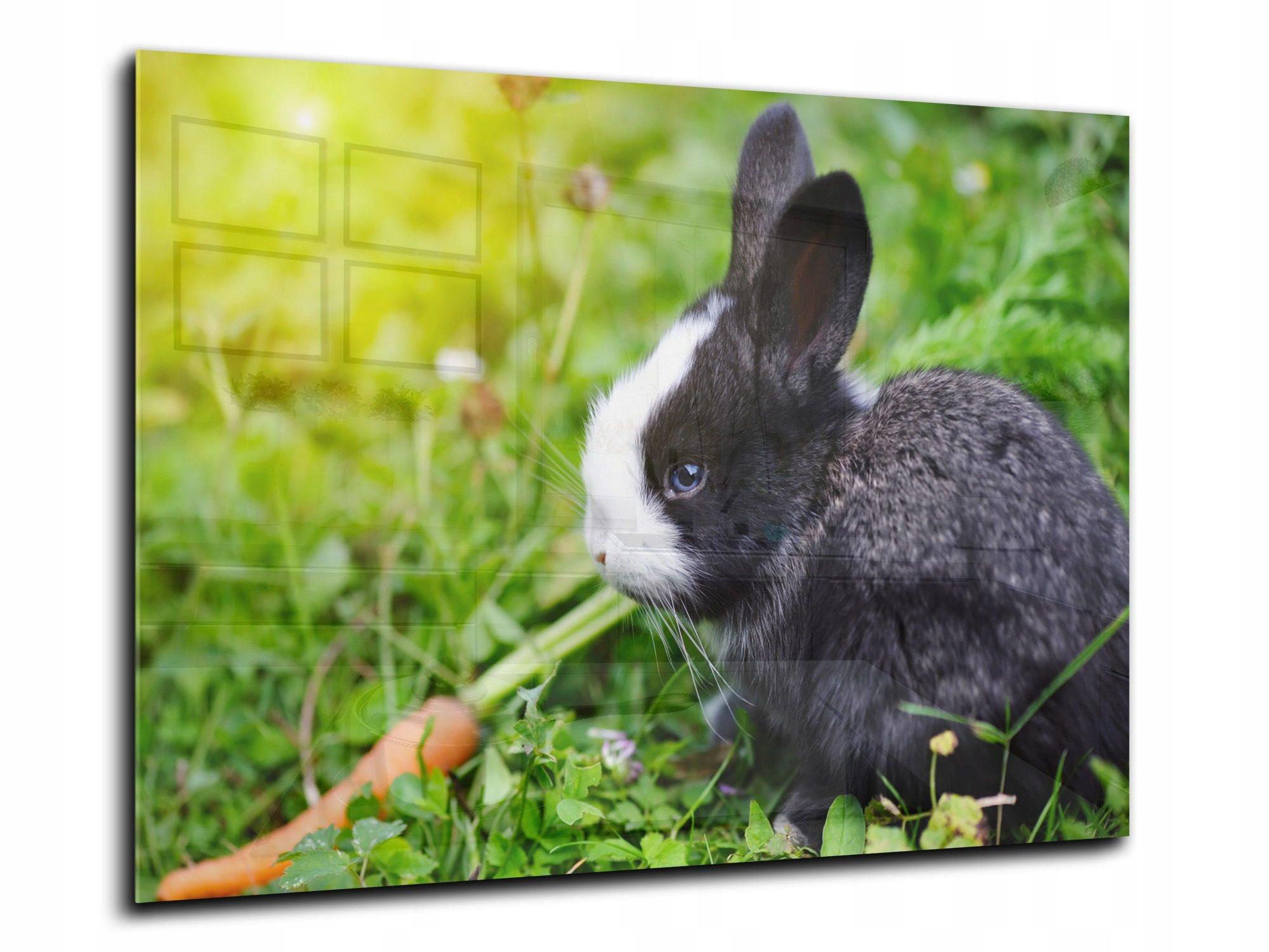 steny dlaždice, sklo, kuchynské 90x60 králik