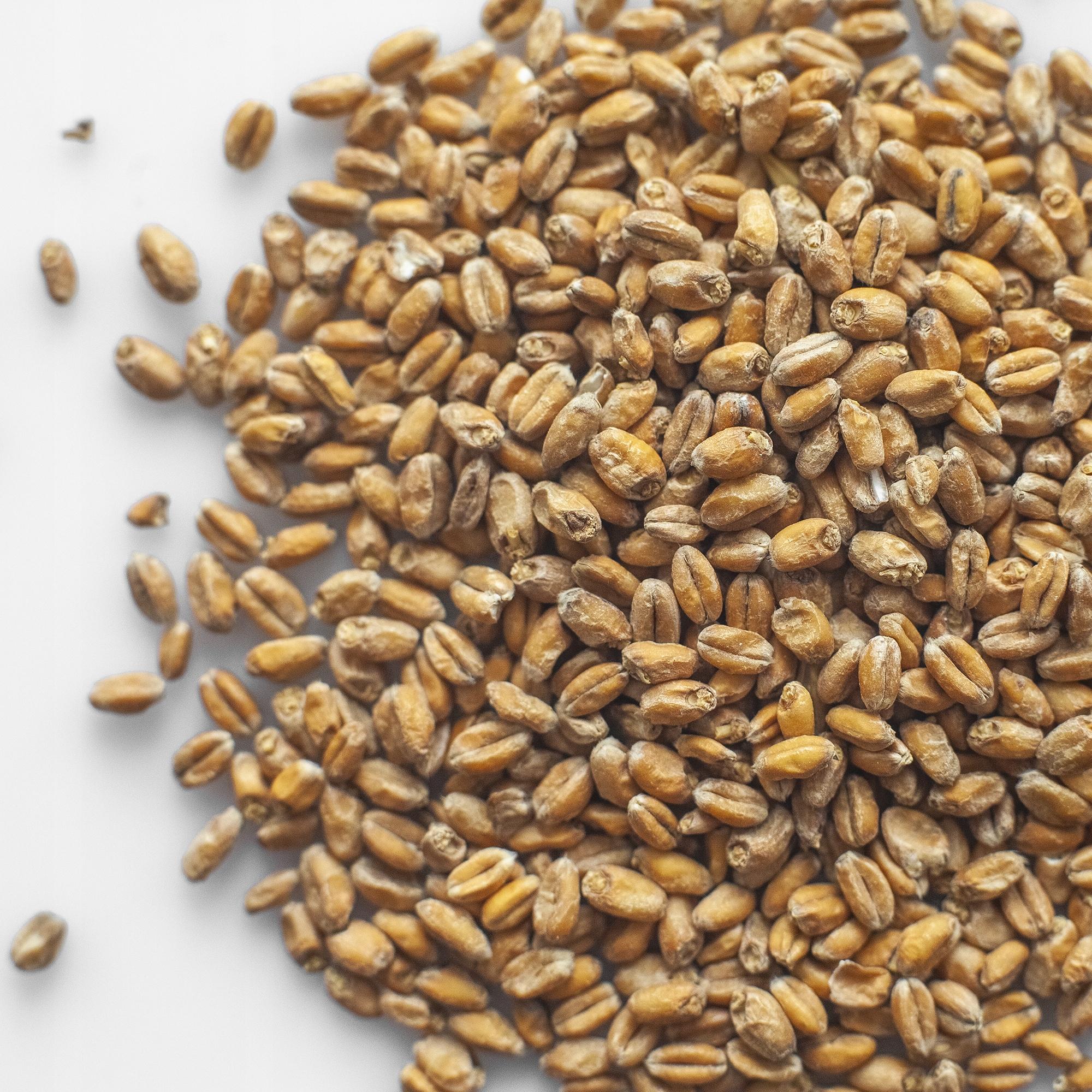 пшеничный солод фото раве снимать