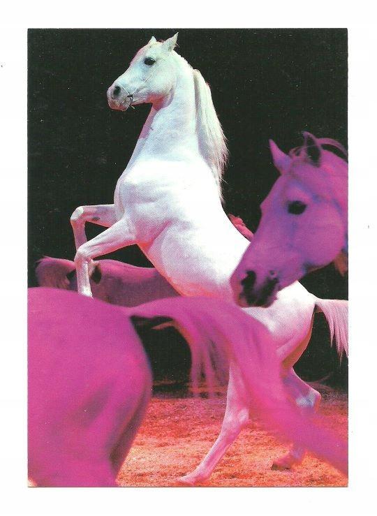 Открытка - Лошади в швейцарском цирке ...