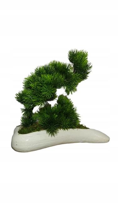 Bonsai strom v keramický hrniec výšky. 25 cm