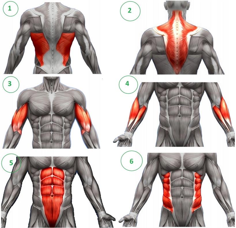 Ab wheel - mięśnie brzucha twarde jak skała - ćwiczenia i sugestie - BioTechUSA