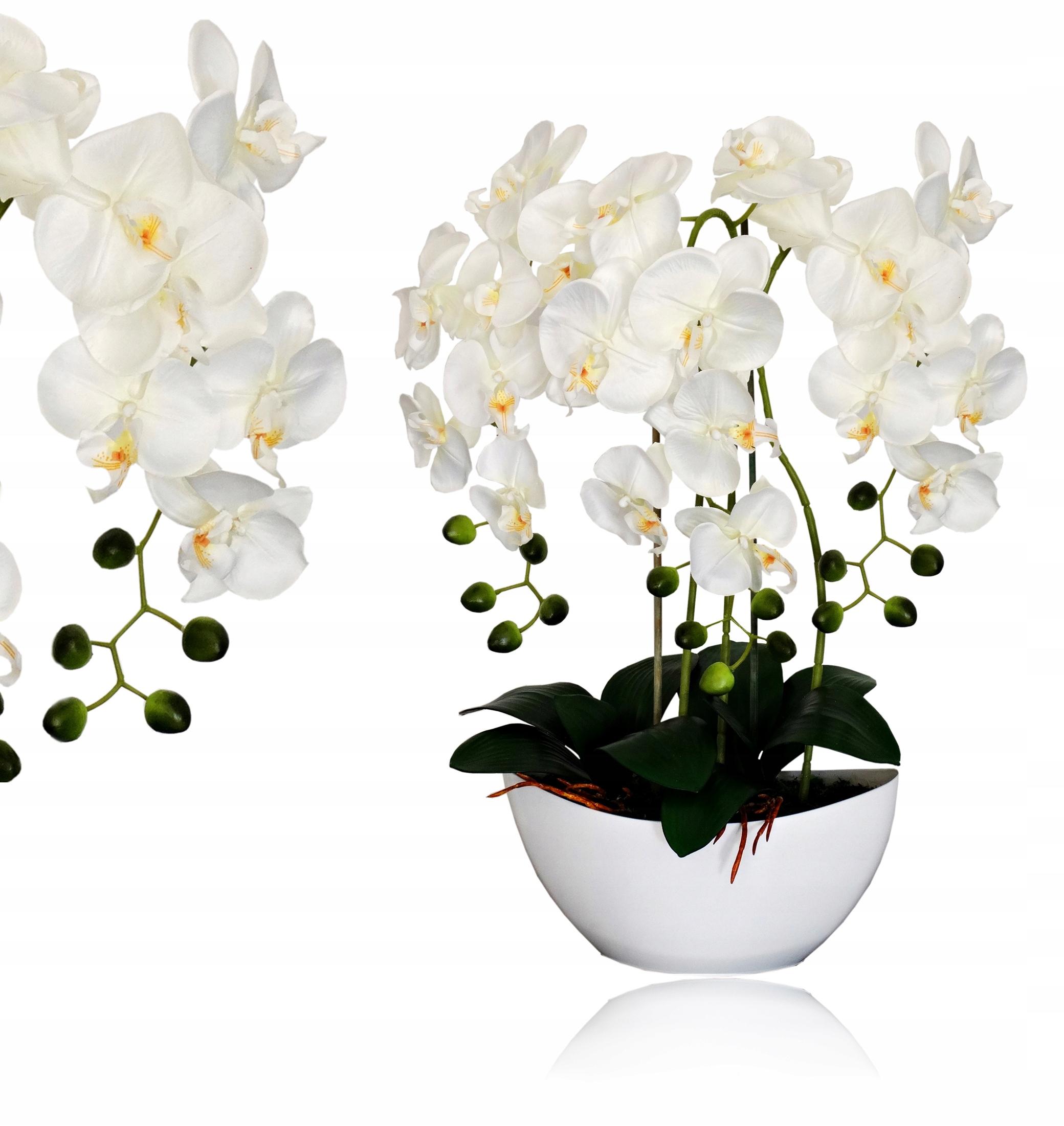 Цветы орхидея купить киев, заказ кишинев