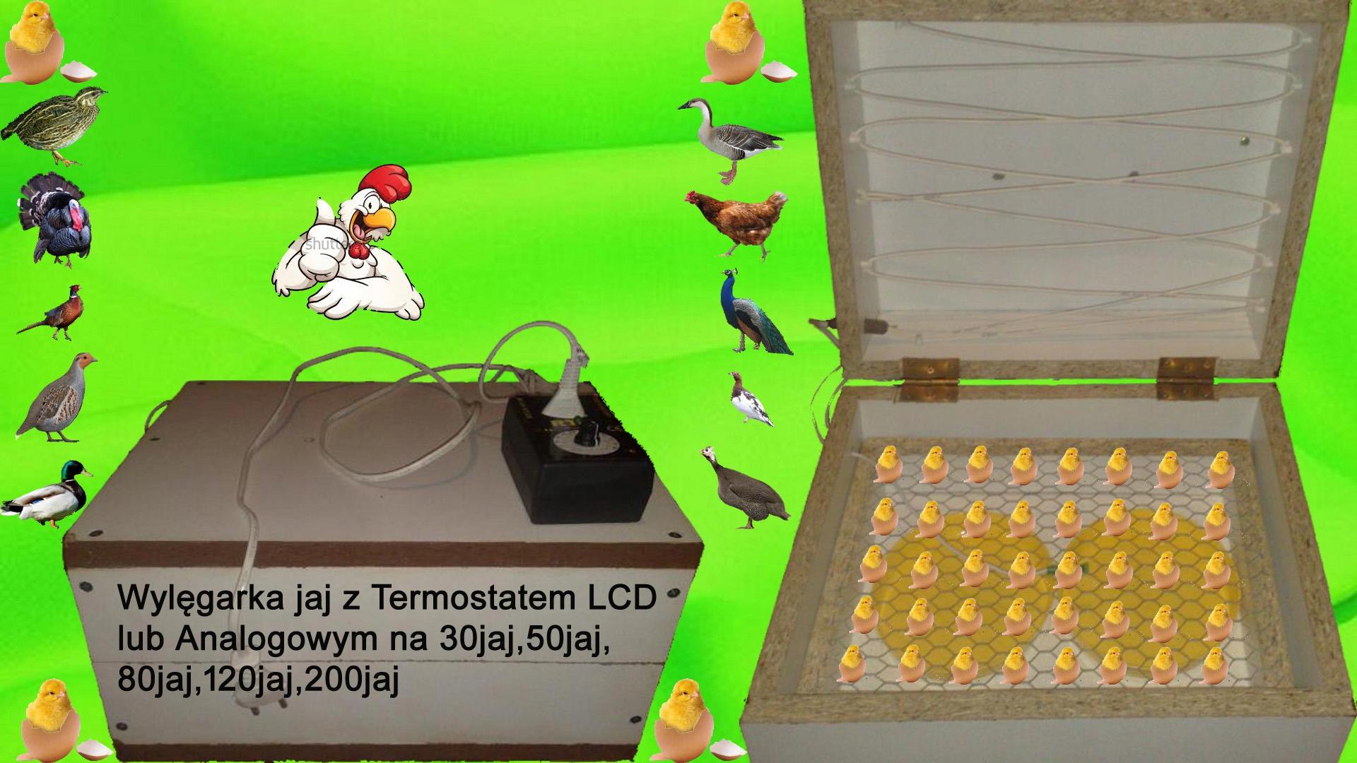 Инкубатор Инкубаторы Новые Wylęgarka всех яиц