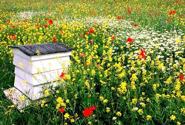 Kwietna Laka Kwiaty Polne Miododajny Trawnik 100g 7866930384 Allegro Pl