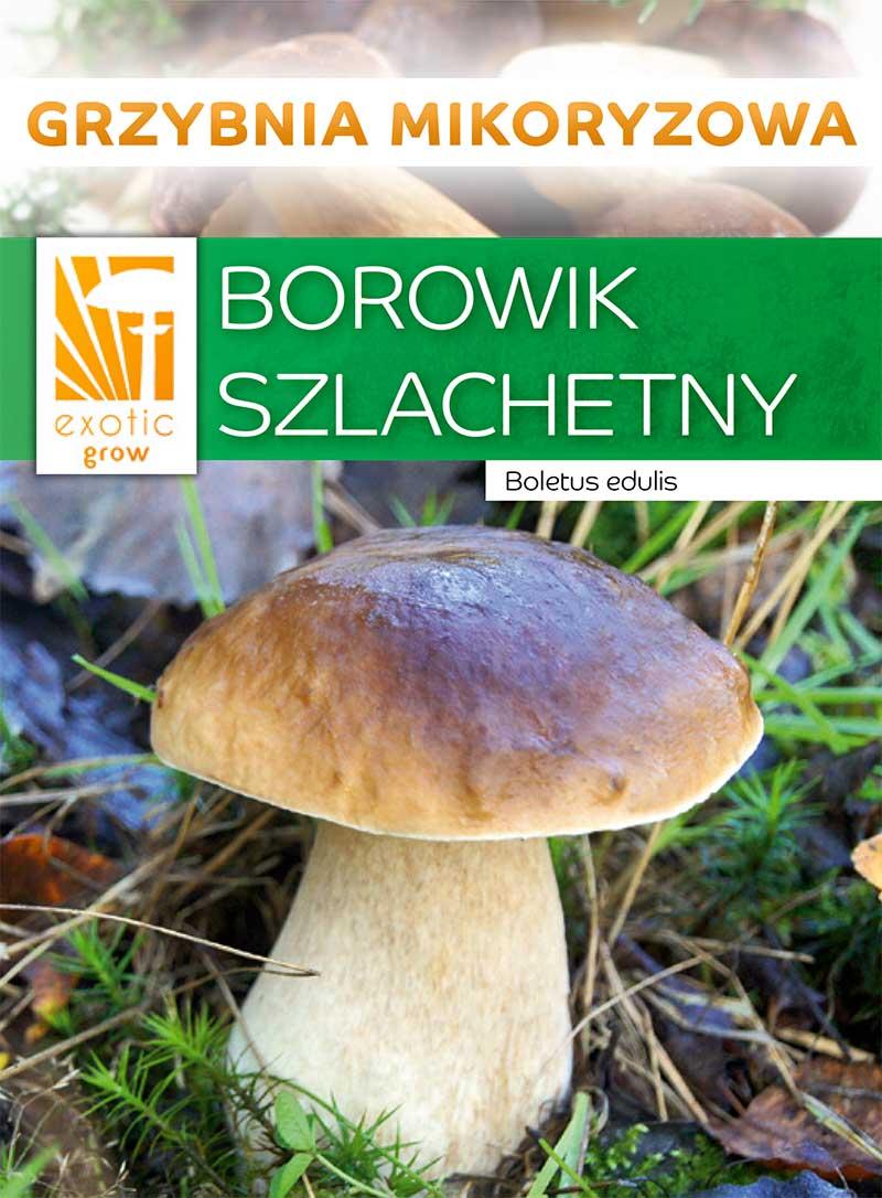 ГРИБЫ НАСТОЯЩИЕ ГРИБЫ лесные грибы