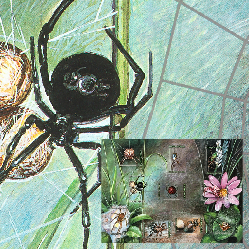 Южноафриканские пауки Black Widow Birdman Spinner Block **