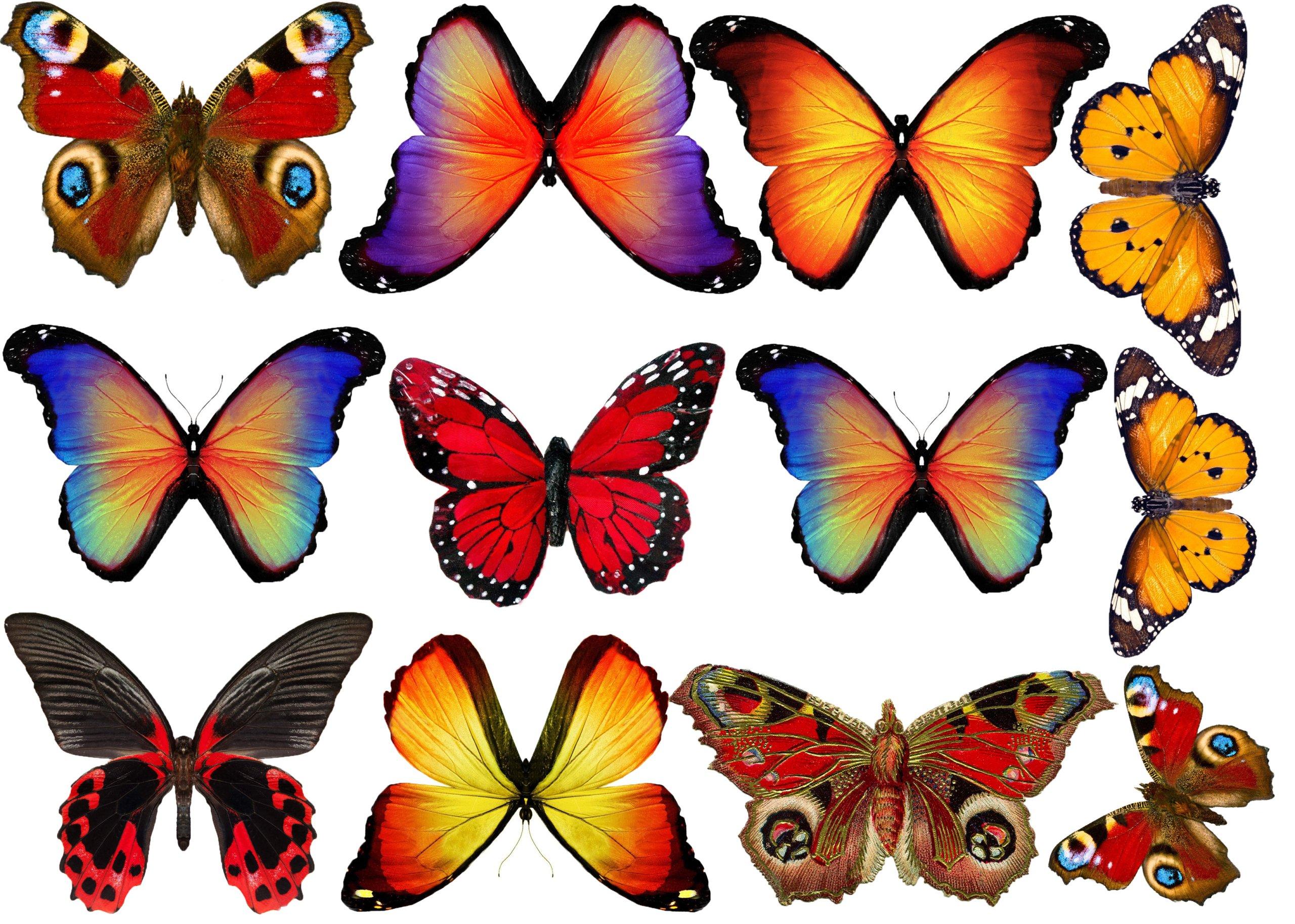 Бабочки для открытки шаблон цветной, скорби фото смешные