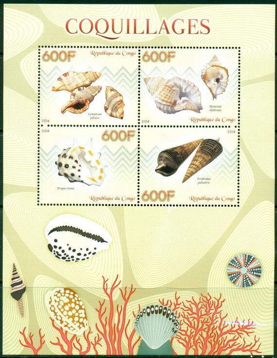Купить Ракушки морские раковины фауна Конго ark. ** #CON1423 на Otpravka - цены и фото - доставка из Польши и стран Европы в Украину.