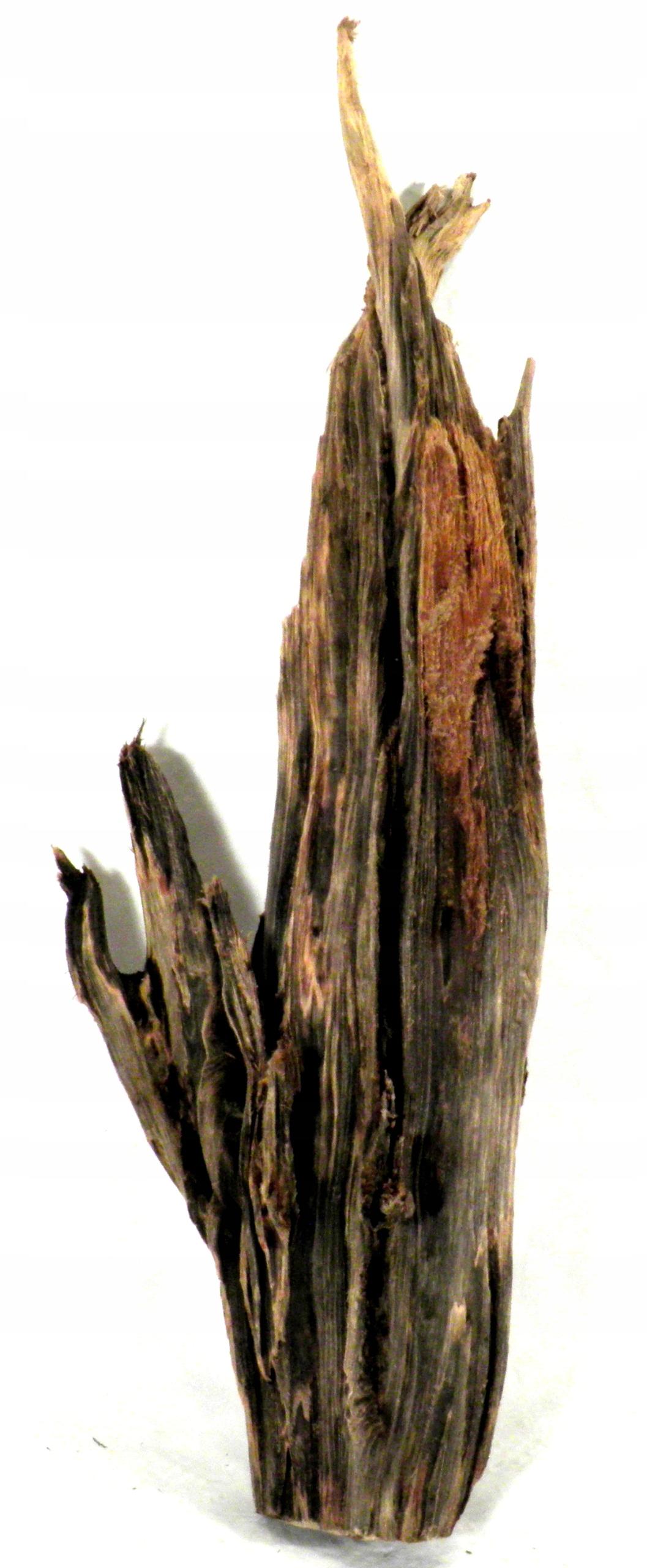 KOREŇ AKVÁRIUM 688ES 20/9/58 GURAMI1 prírody
