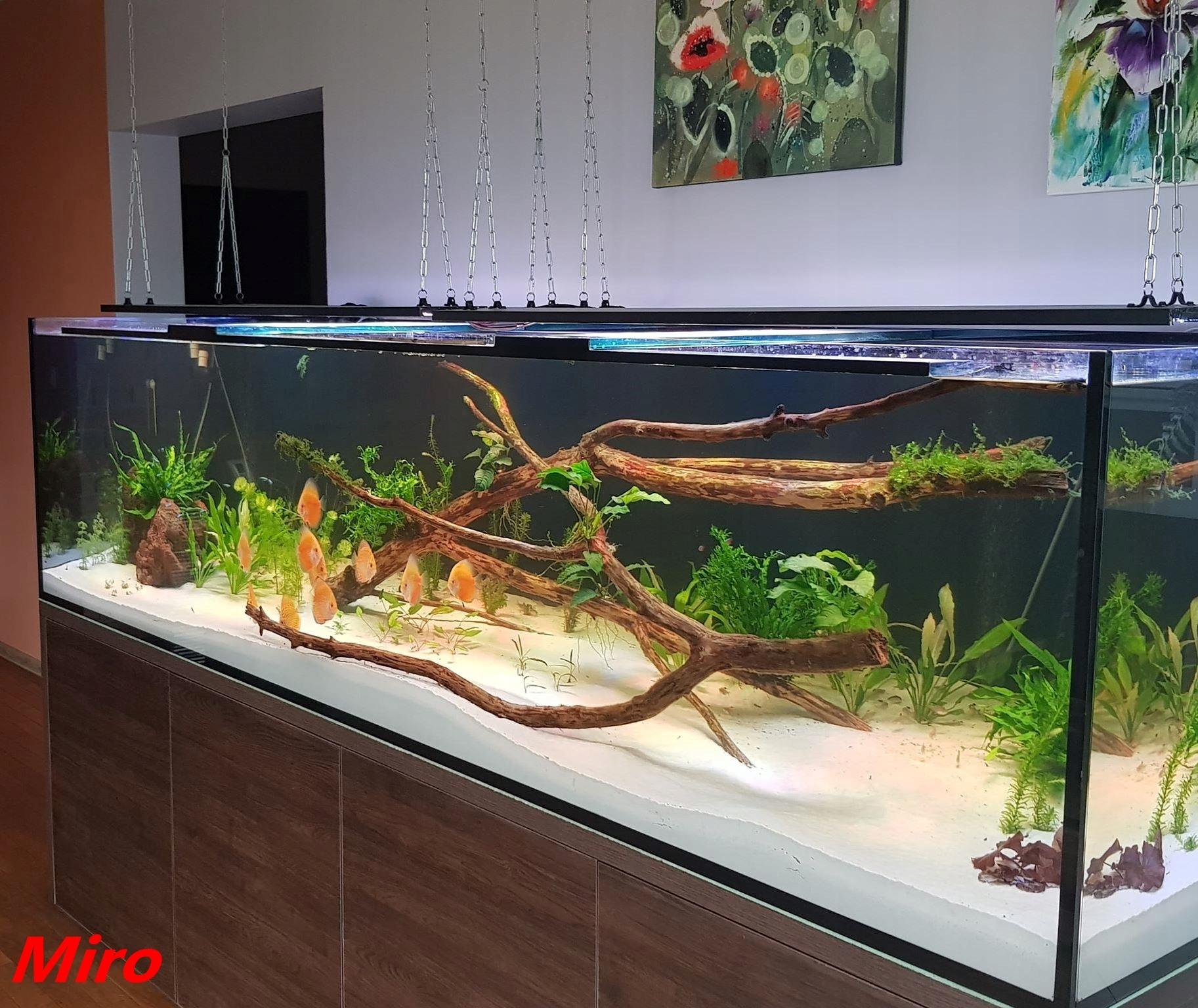 Oświetlenie Power Led Do Akwarium