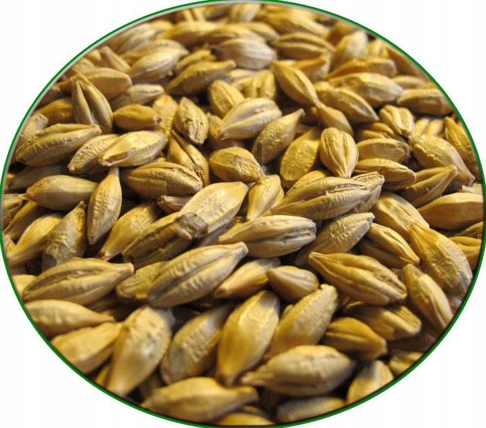 зерно ячменя кормовое зерно куры 15 кг