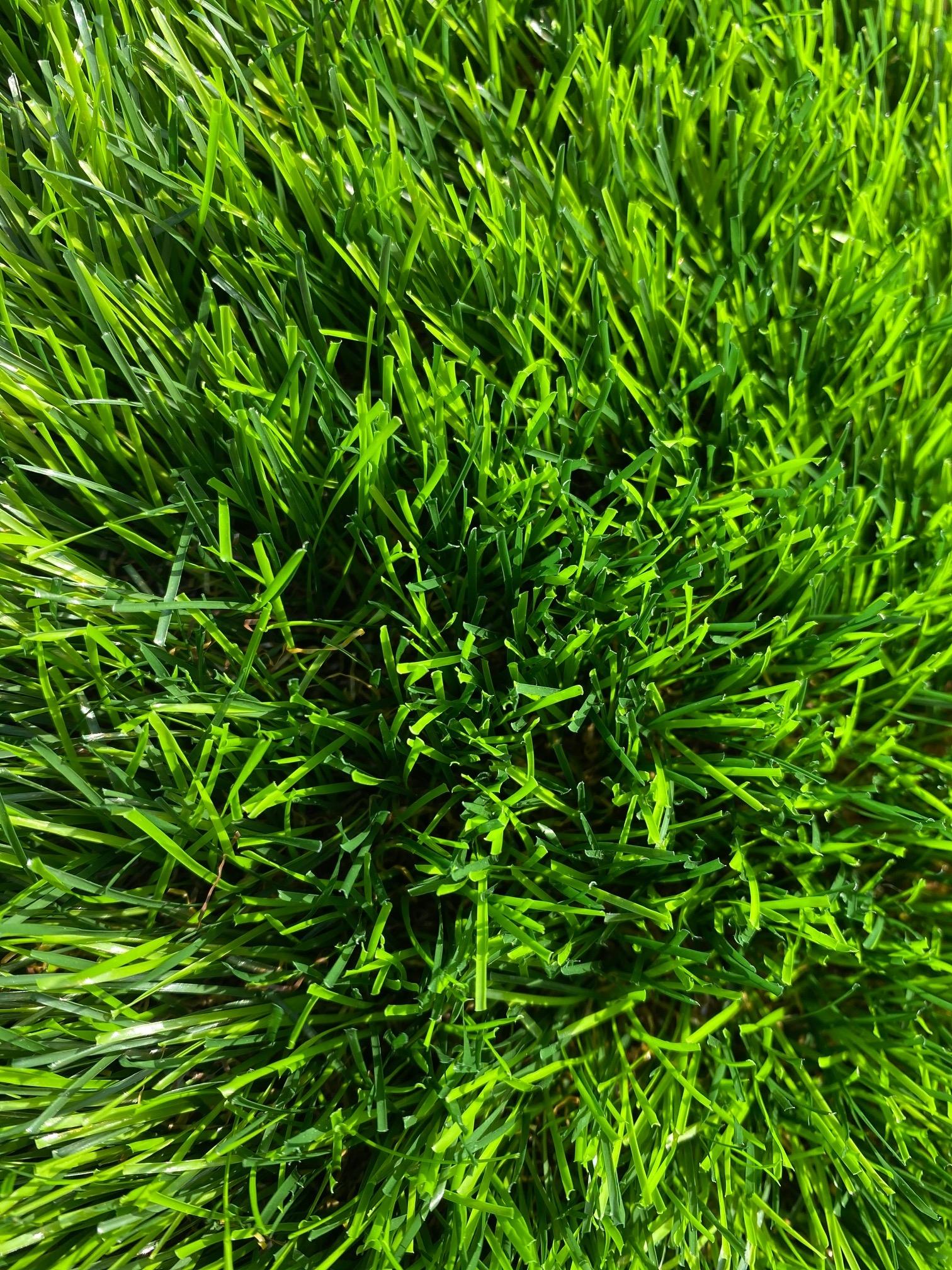 Sztuczna trawa na balkon i taras. Wygodny sposób na zieleń wokół domu