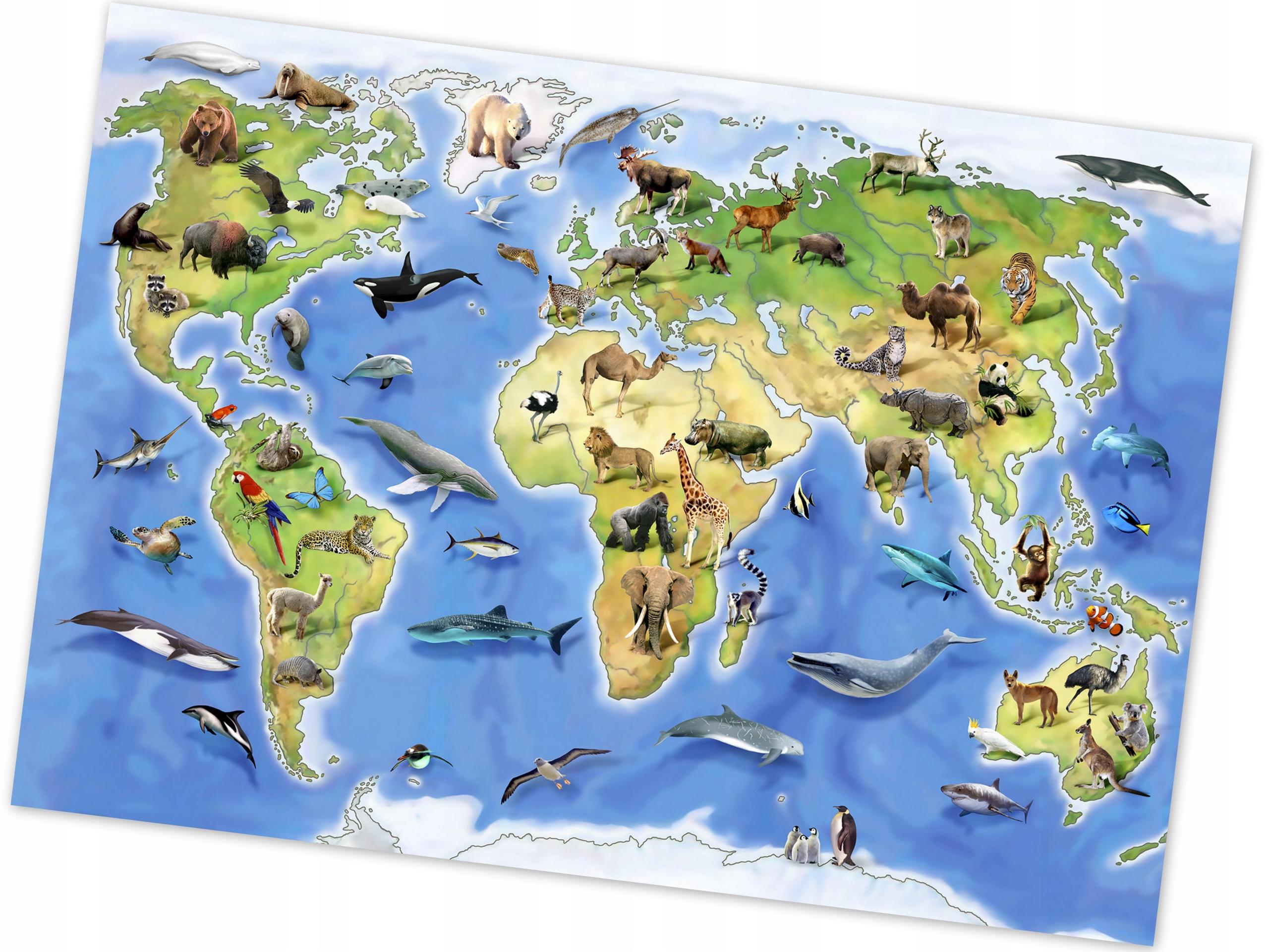 владельцев, карта мира с картинками животных вечерница