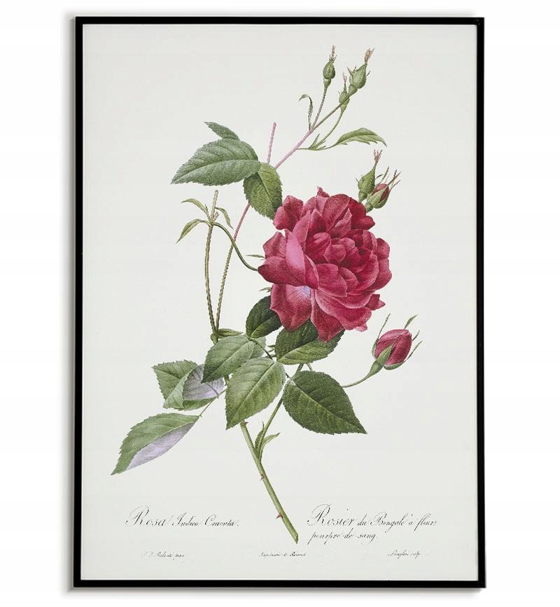 Plagát vintage starý obraz ruže maľovanie 40x50