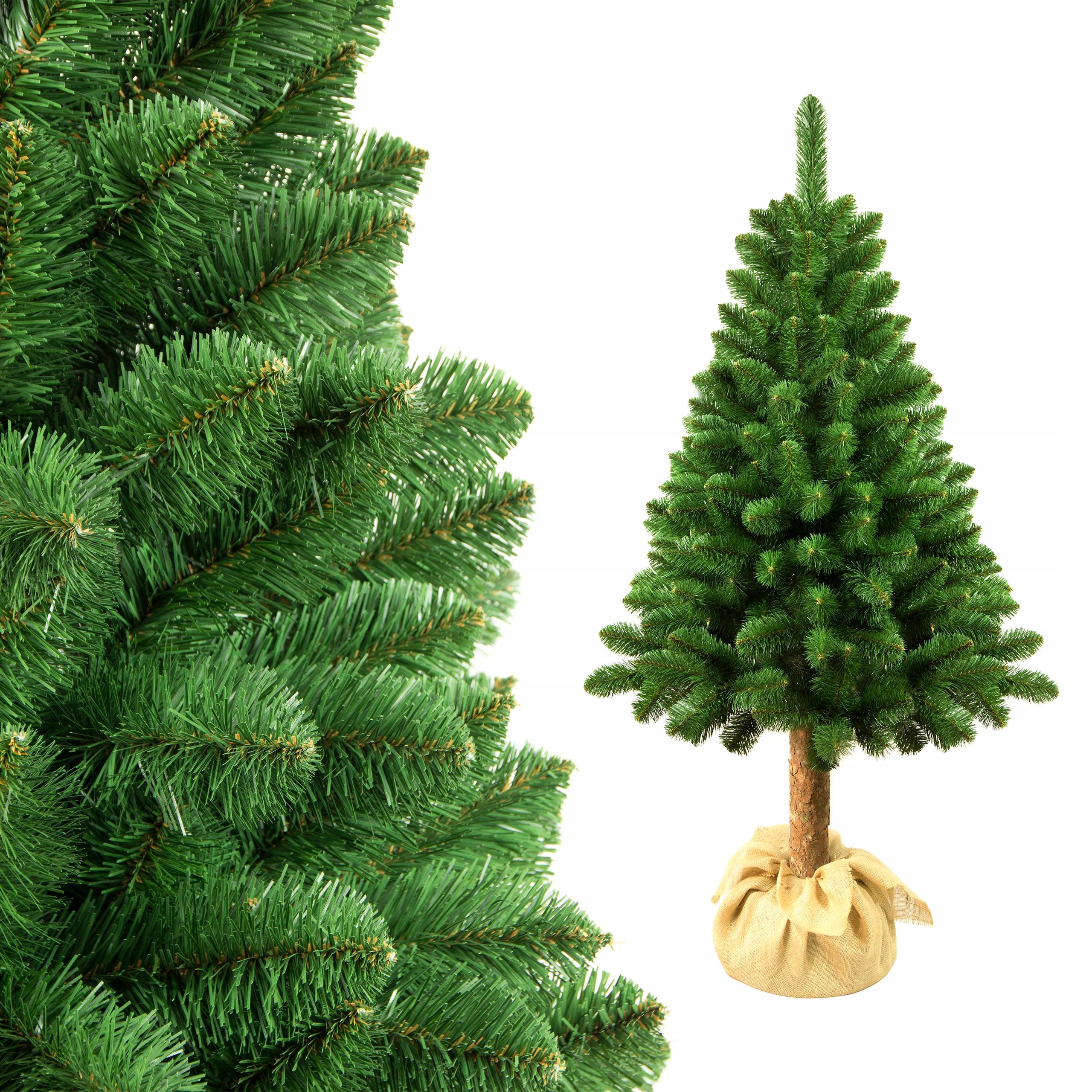 сосна или елка картинки