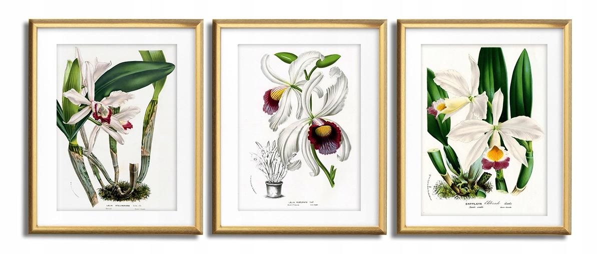 Orchidea, biela Orchidea VINTAGE PLAGÁTY V RÁMOCH