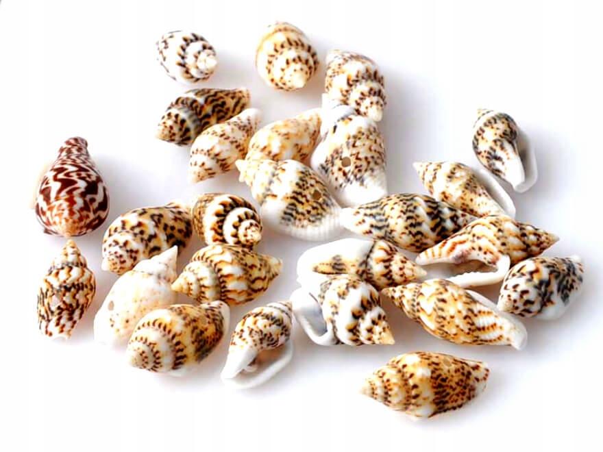 Ракушки маленькие мини миниатюрных натуральные ТРИО