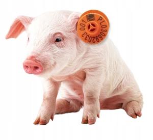 Серьги для свиней, свиней - 100 шт.