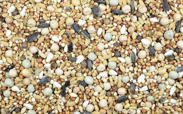 KAMPOL- корм для голубей без кукурузы ВК 10