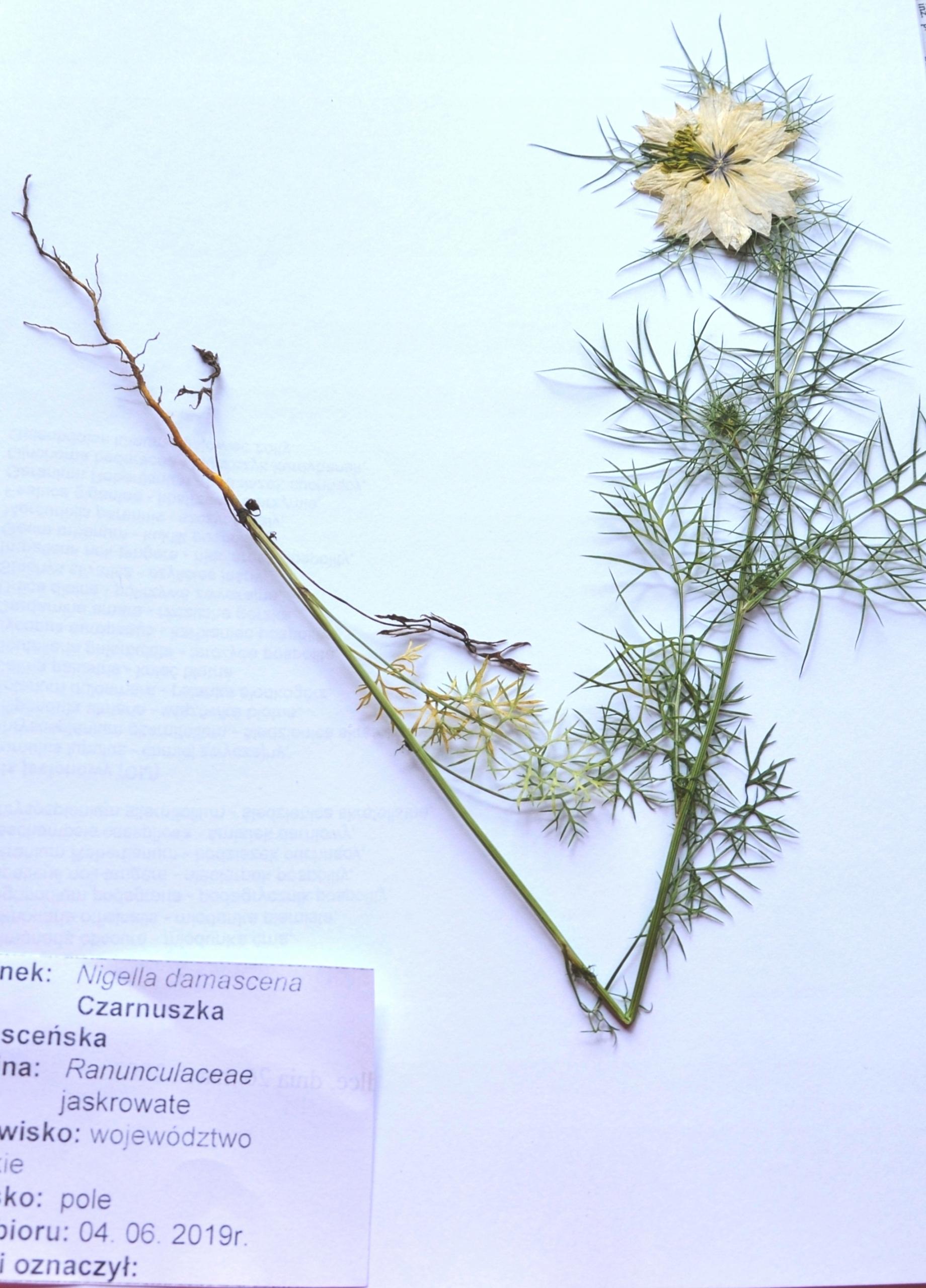 ЗИЕЛЬНИК, яровые растения 20 видов, набор.