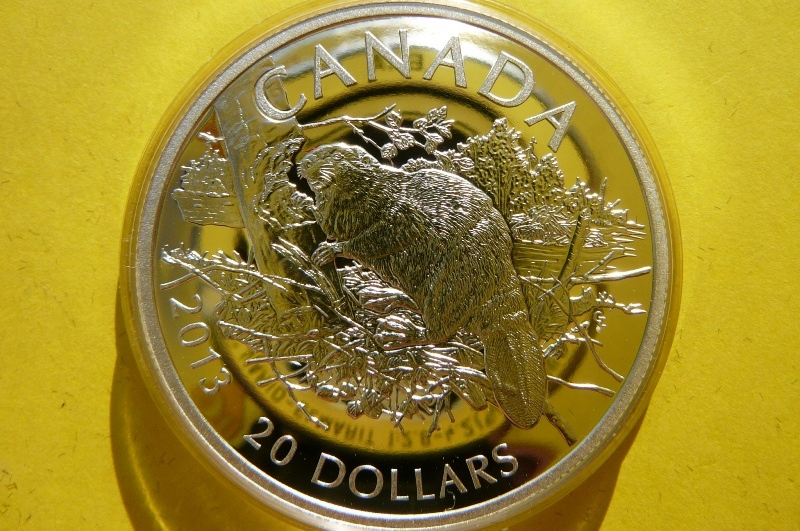 20 DOLLAR CANADA 2013 - BÓBR - STRIEBORNÉ 999-OZ RARE