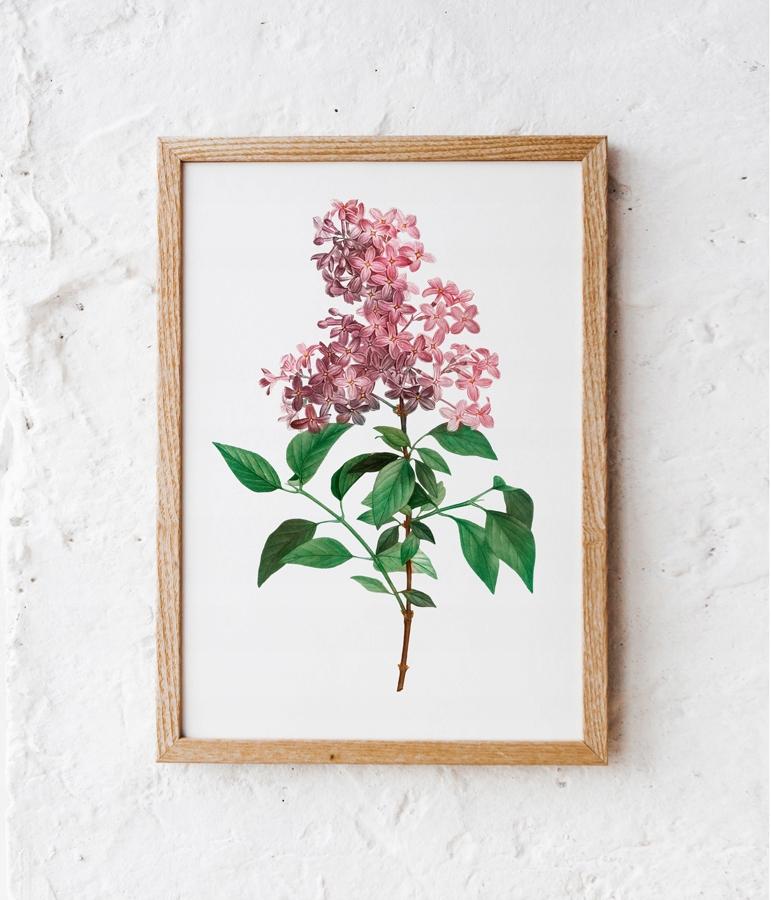 obrázok plagátu, rastliny, kvety, ročník 30x40 cm
