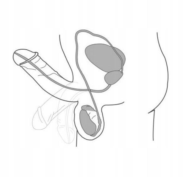 podstawowy męski penis