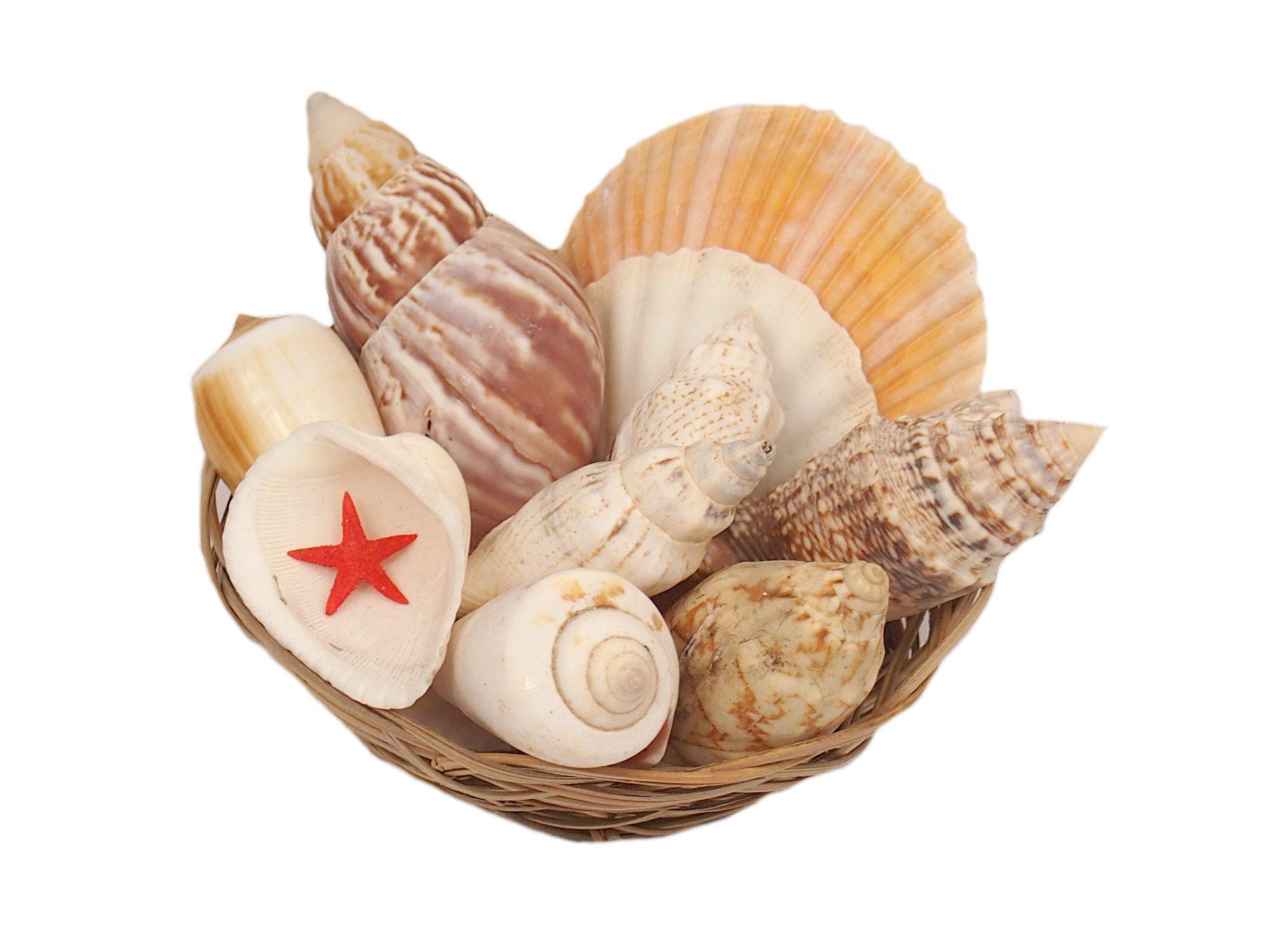 Shells Seashells Extra Mix Dekorácie Nákupný košík 150g