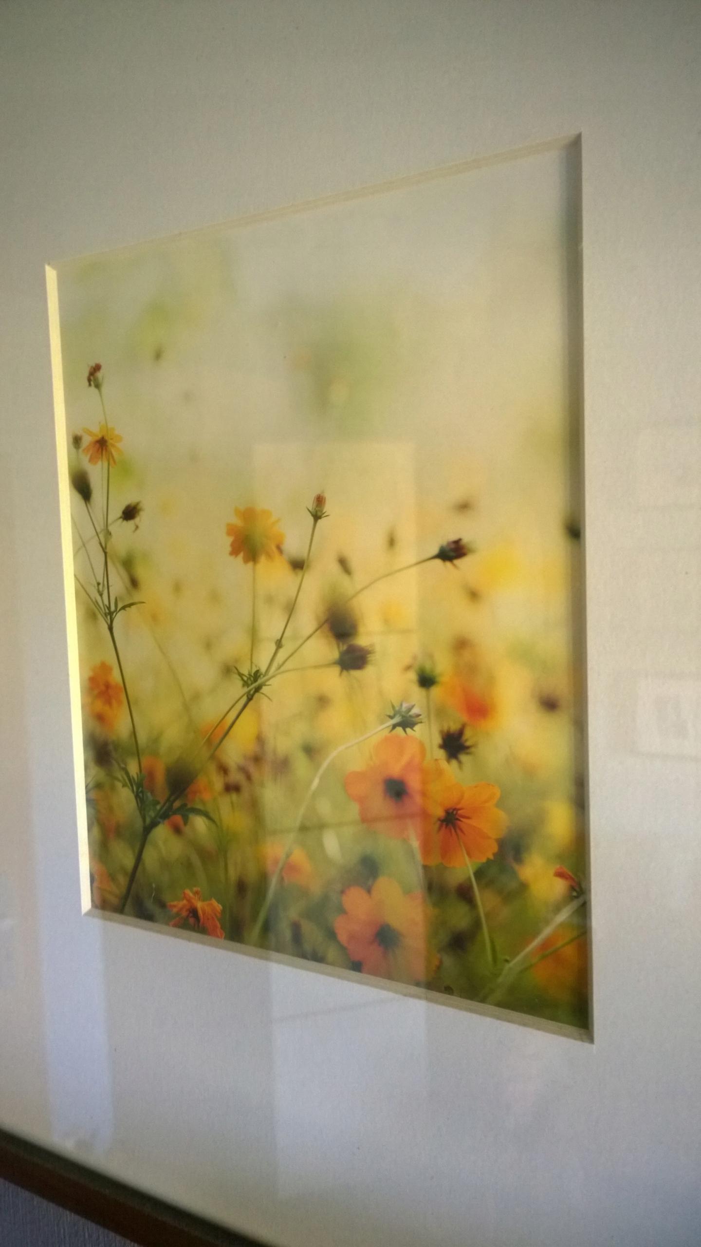 Ikea Plakat Kwiaty łąka 4050 Rama Obraz Unikat 7660651110