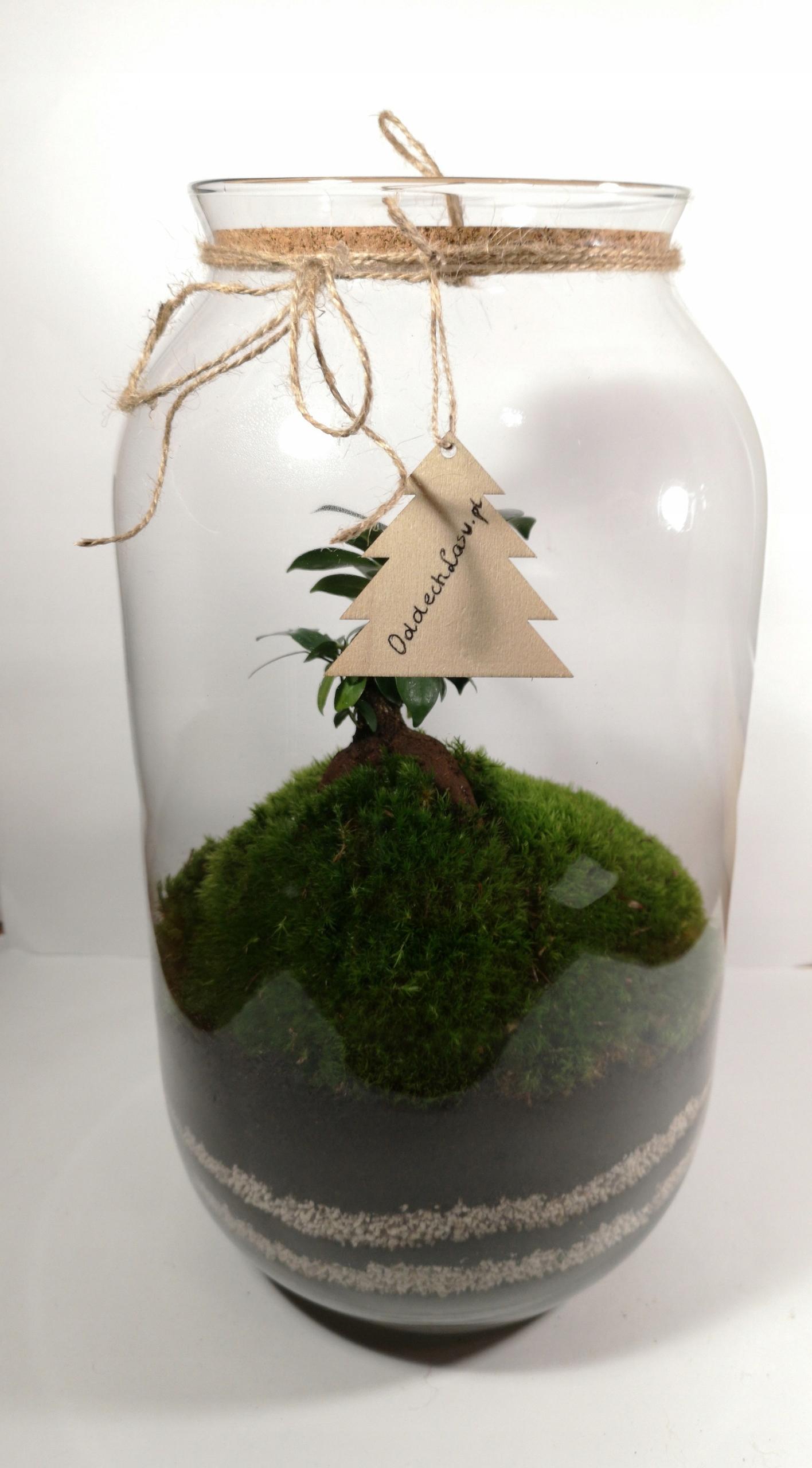Las w słoiku - Bonsai Fiskus L - Słoik 42 cm