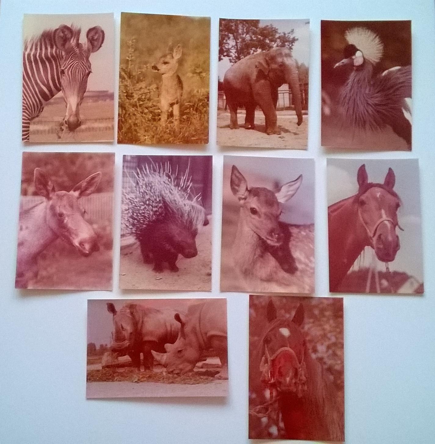 Konie Arabskie Zwierzęta Zoo Słoń Zofia Raczkowska 7210890004