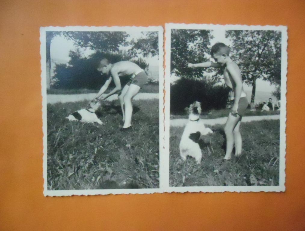 2 x Chłopczyk tresujący psa-przedwojenne