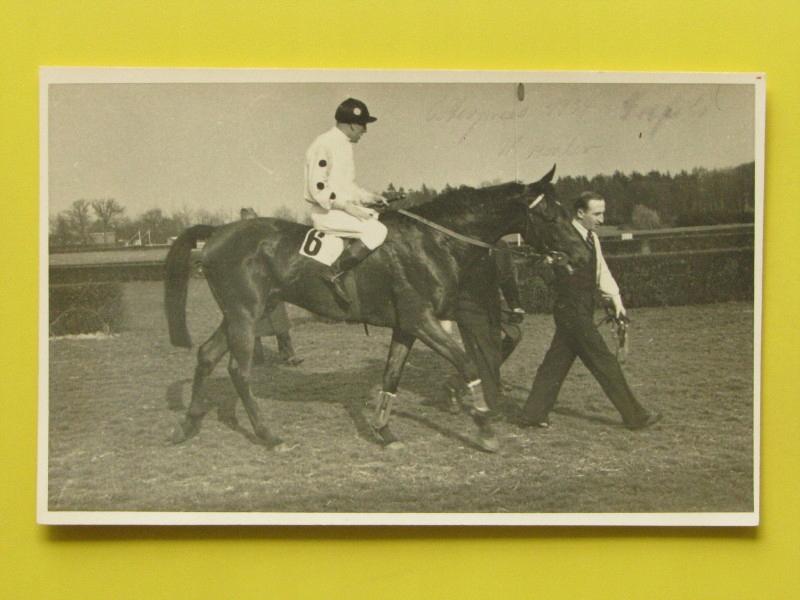 #32162, konie, wyścigi