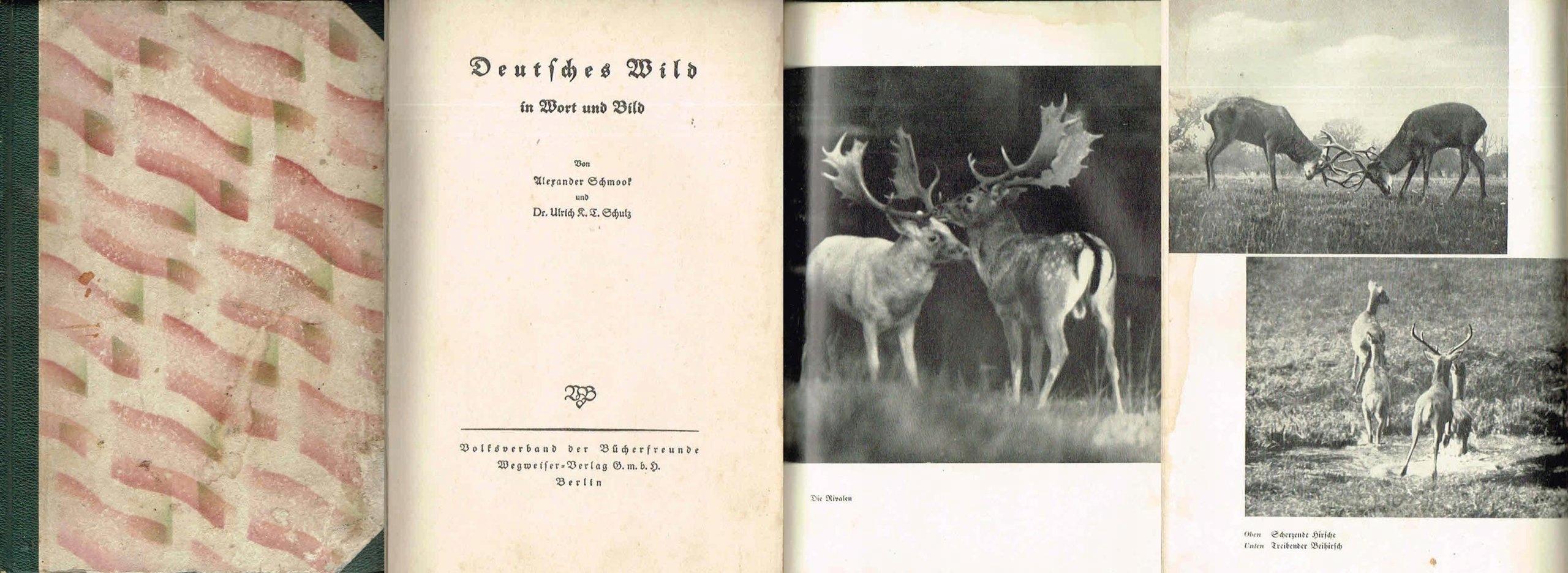 = Deutsches Wild in Wort und Bild [NIEMCY FAUNA] =