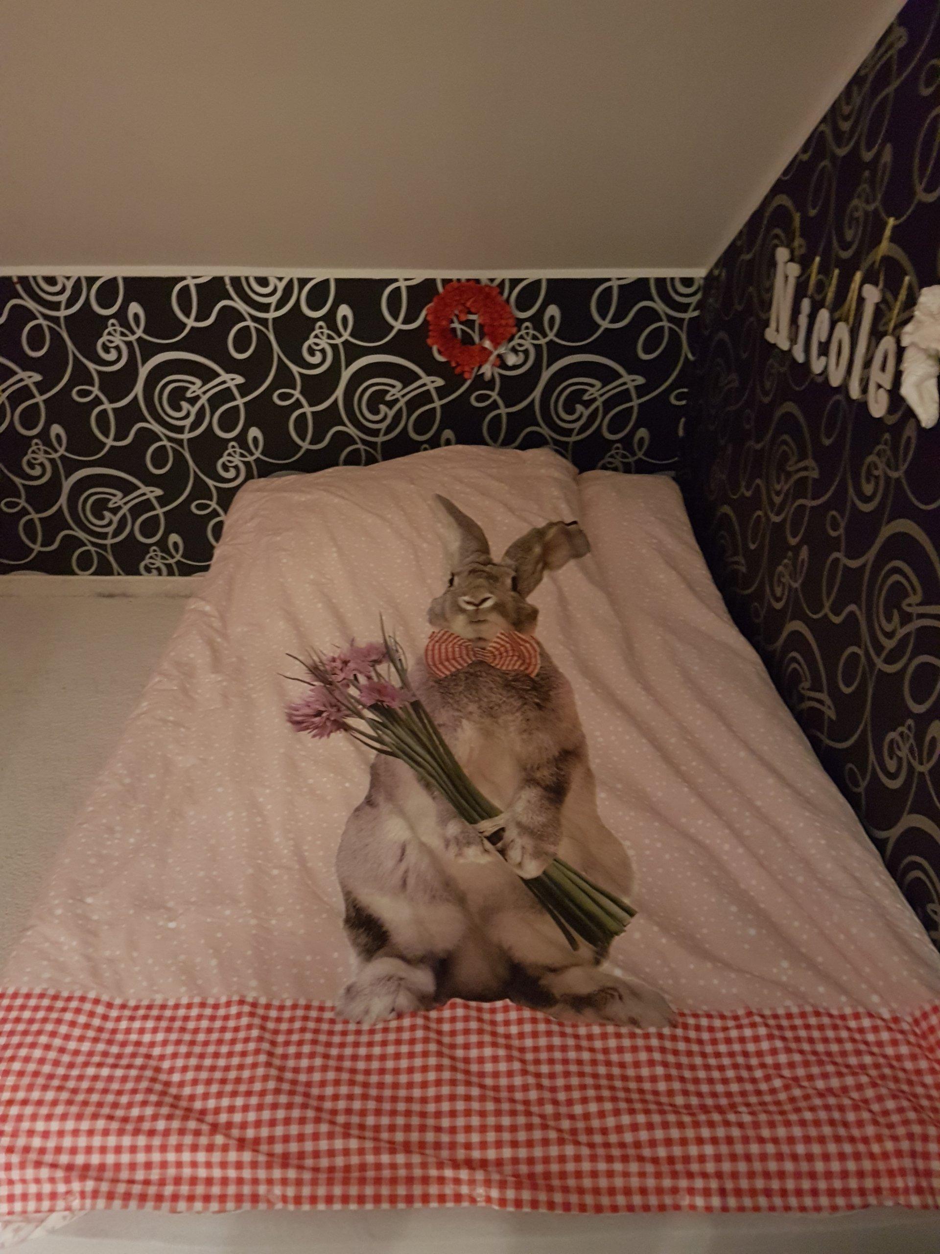 Materac 115x200 Cm Pokrowiec Zamiast łóżko 90x200