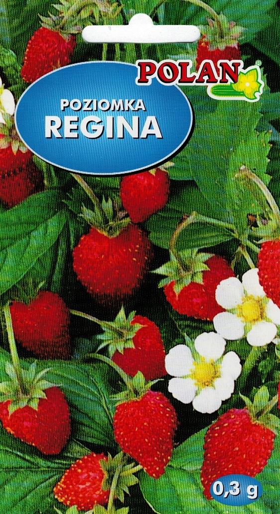 Poziomka Regina nasiona Polan 0,3 g
