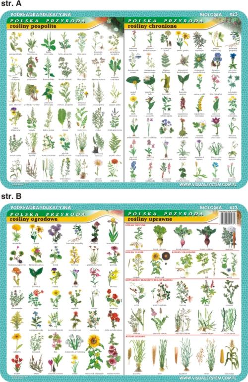 Podkładka Biologia Rośliny Uprawne Chronione 023