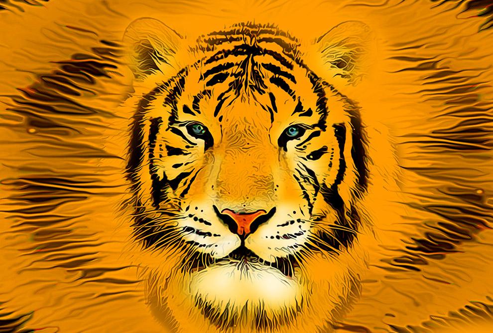 Orange tiger Plakaty 185x125 Na wymiar Postery