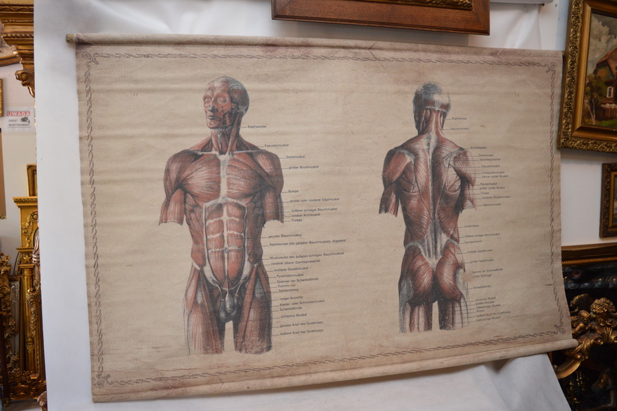 Mapa Anatomiczna Człowieka Przekrój Unikat 7413460284