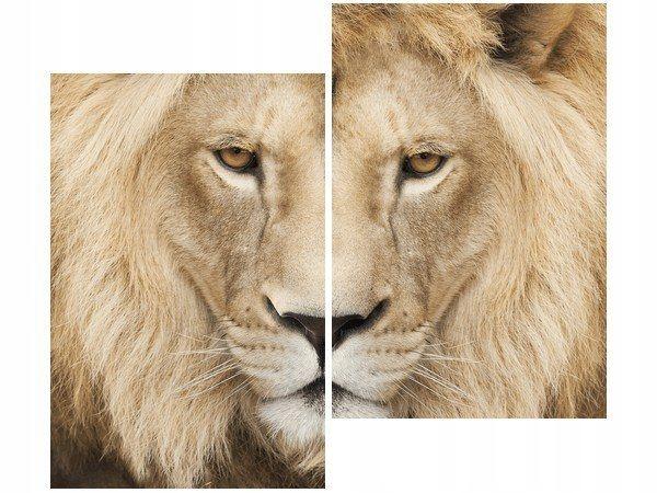 80x70cm Król zwierząt duo obraz druk dekoracja ści