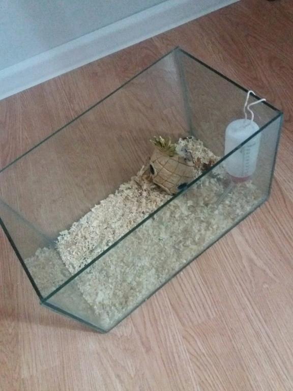 akwarium dla zwierzaka gryzonia