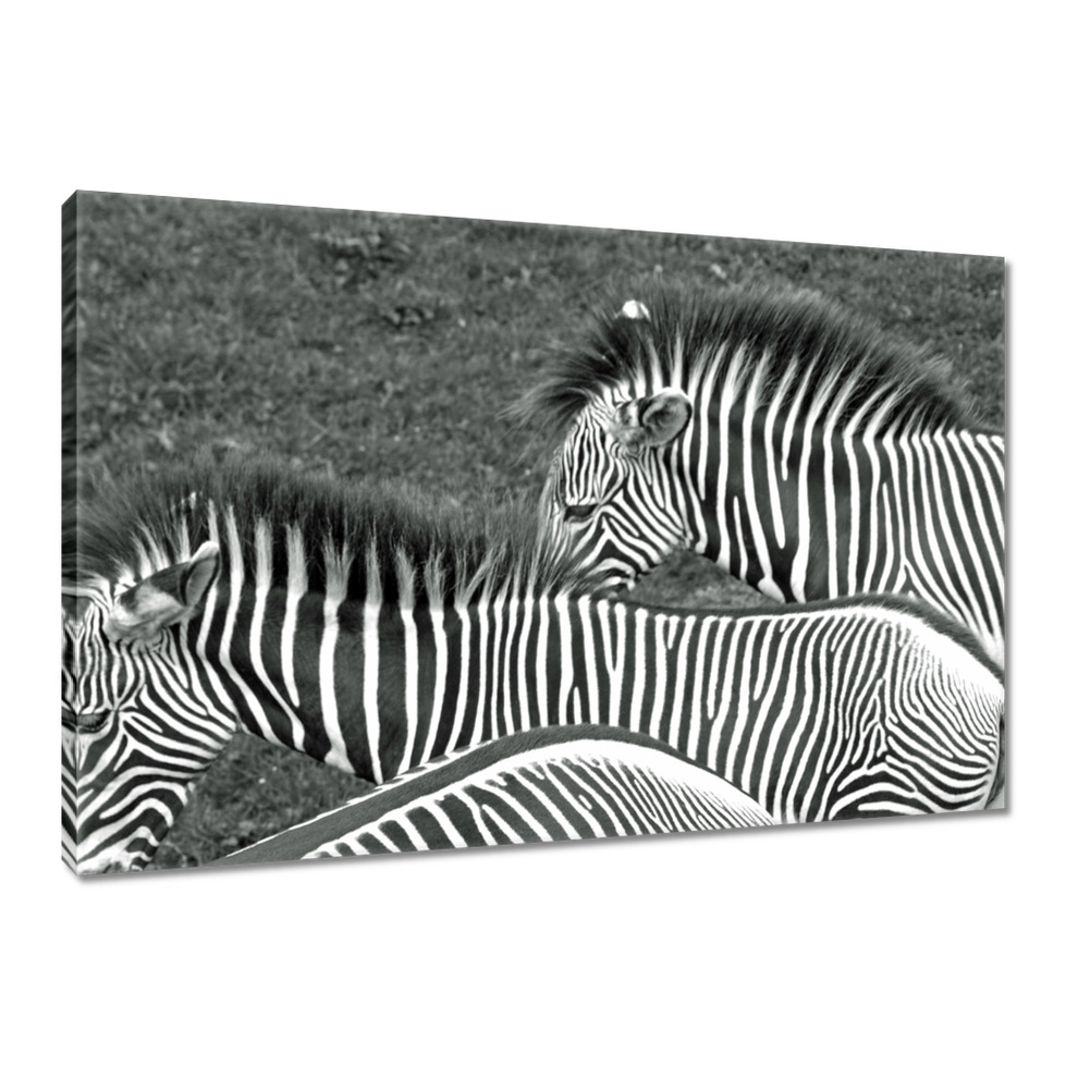 Obrazy na płótnie 120x80 Fotoobraz Paski zebry