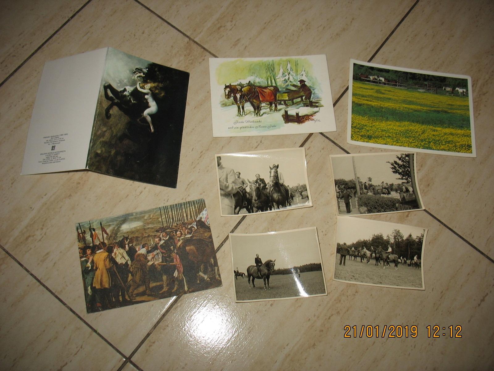 KOŃ konie pocztówka fotografia Zestaw