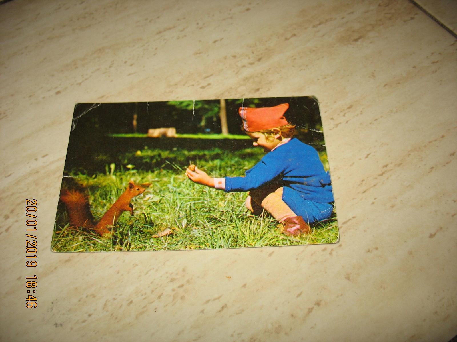 Wiewiórka dziecko stara pocztówka