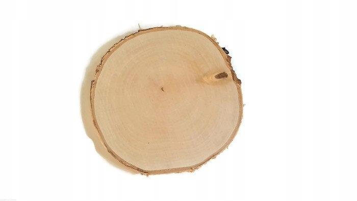 Plastry drewniane krążki drewna Brzoza 15-20 cm
