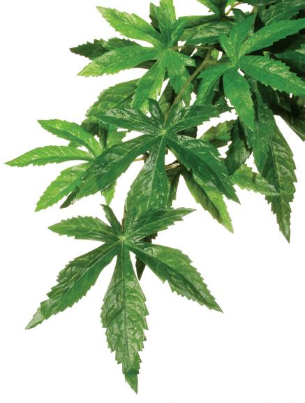 Exo Terra Hanging Rainforest Plant Medium-Abuliton
