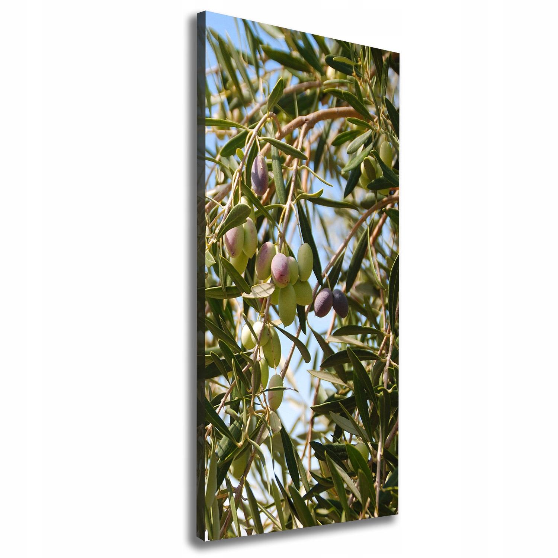 Foto obraz na płótnie Oliwki na drzewie 50x125 cm