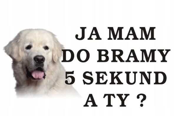 Tabliczka Pies Ja Mam Do Bramy 5s. A Ty 40x30cm221