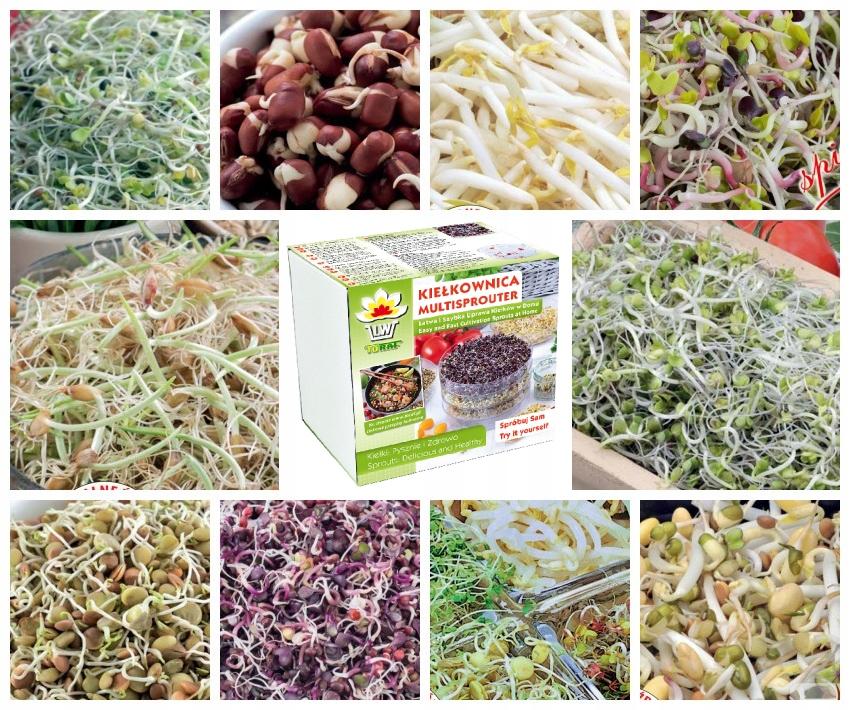 Ящик для ростков + набор x10 семян для рассады 290г